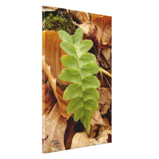 Little fern Glossy Stretched Canvas Print