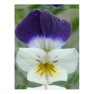 Little flower photo post card postcard