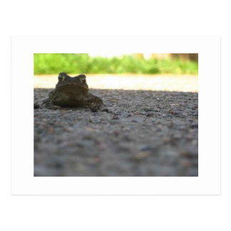 Little Froggy Postcard