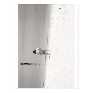 Little Girl Hunting Sea Shells on Beach Postcard