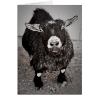 Little Goat Cards