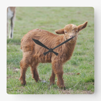 Little Goat ~ kids ~ small goat Square Wall Clock