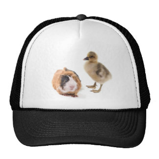 little goose and guinea pig trucker hats
