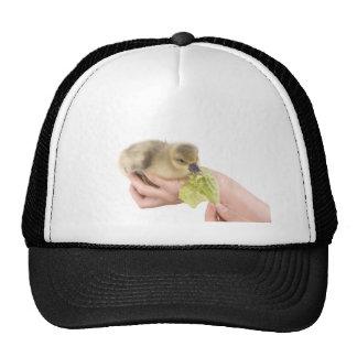 little goose eats trucker hat