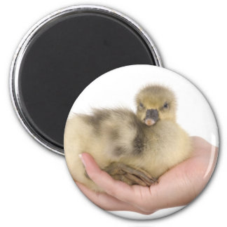 little goose in one hand magnet