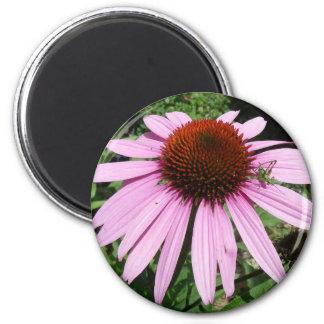 Little Grasshopper on a Purple Flower 2 Inch Round Magnet