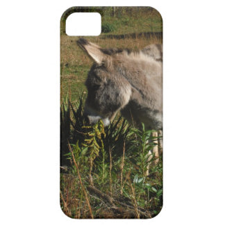 Little gray Donkey w / wildflowers iPhone SE/5/5s Case