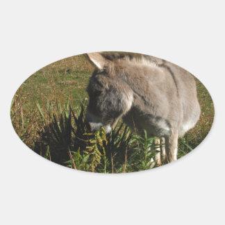 Little gray Donkey w / wildflowers Oval Sticker