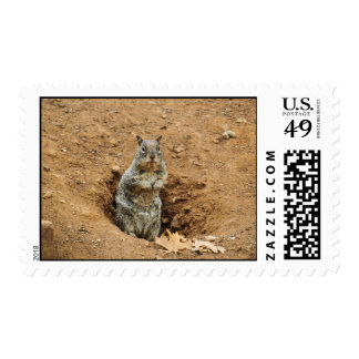 Little Gray Squirrel Postage Stamps