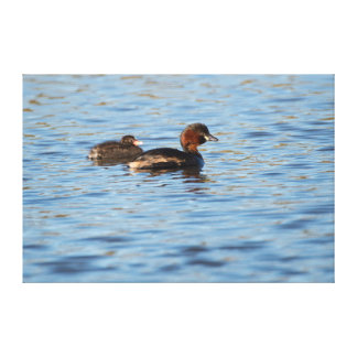 Little Grebe and Chick Canvas Print