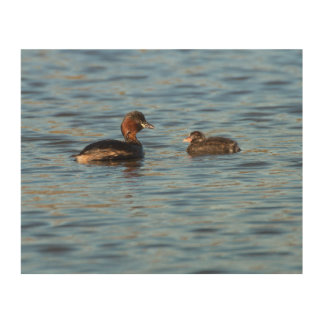 Little Grebe and Chick Wood Wall Decor