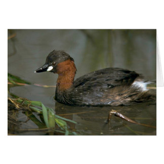 Little Grebe Cards