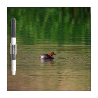 Little grebe duck in breeding plumage dry erase board