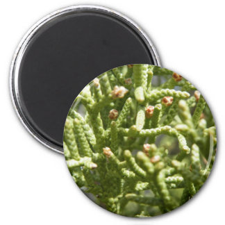 Little green fingers 2 inch round magnet