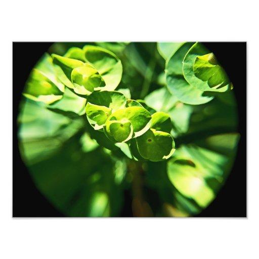 Little Green Flowers Photo Print