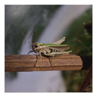 Little Green Grasshopper Poster at Zazzle