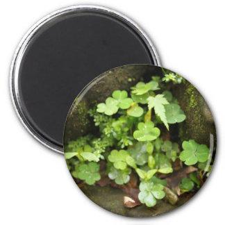 Little greens 2 inch round magnet