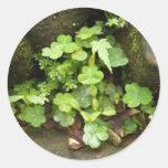 Little greens sticker