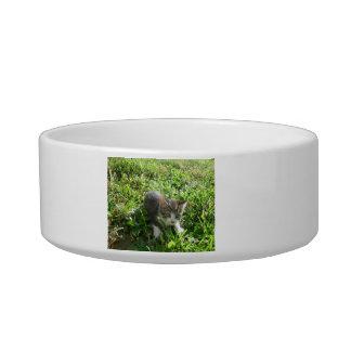 Little Grey Boy Bowl
