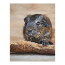 Little Guinea Pig Painting Flyer