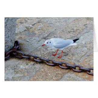 Little Gull Big Chain St Ives Cornwall England Card