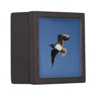 Little Gull Jewelry Box