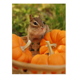 Little Harvest Chipmunk Postcard