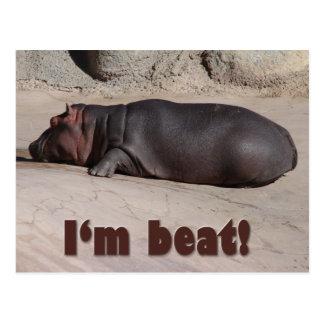 Little Hippo Tells All Postcard
