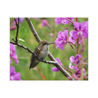 little Hummingbird Canvas Print
