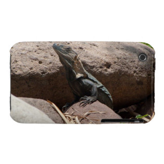 Little Iguana on the Rocks; No Text Case-Mate iPhone 3 Case