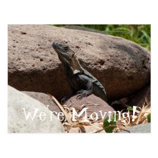 Little Iguana on the Rocks Postcard
