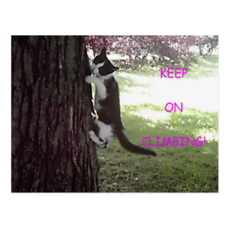 Little Kitten Big Tree Postcard