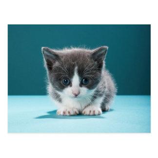 Little Kitten Postcard