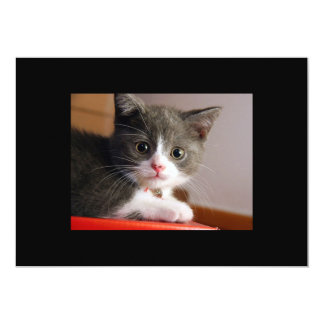 little_kittens (24) adorable fluffy pets cats baby card