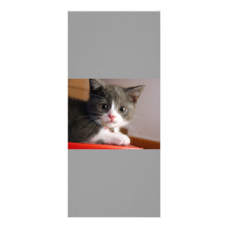 little_kittens (24) adorable fluffy pets cats baby rack card design