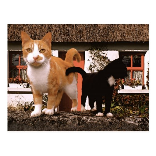 Little kitties-2 post cards