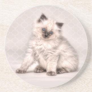 Little Kitty Coaster