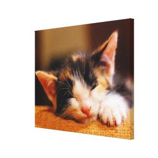 Little Kitty Sleeping Canvas Print