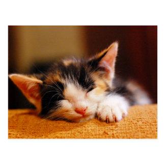 Little Kitty Sleeping Postcard
