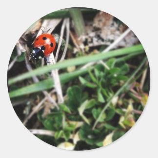 Little Ladybug Classic Round Sticker