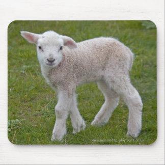 Little Lamb Mousemat