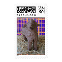 Little Lamb Stamp
