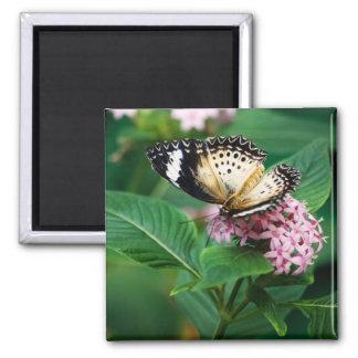 Little Leopard Wings Magnet