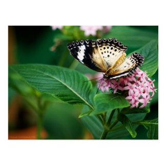 Little Leopard Wings Postcard
