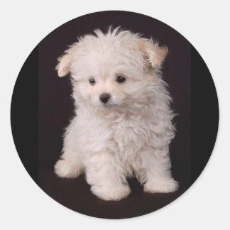 Little Maltese Puppy Classic Round Sticker