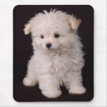 Little Maltese Puppy Mouse Pads
