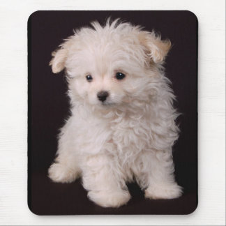 Little Maltese Puppy Mouse Pad