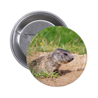little marmot button