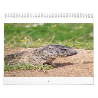 little marmot calendars