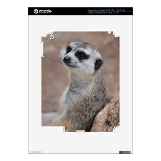 Little Meerkat Skin For iPad 3